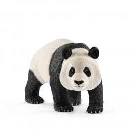 Гигантская панда, самец